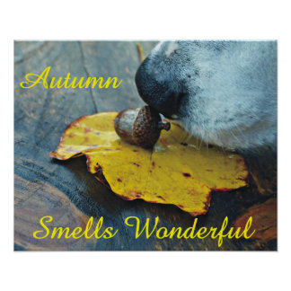 Autumn Smells Wonderful Dog Sniffing Acorn Poster