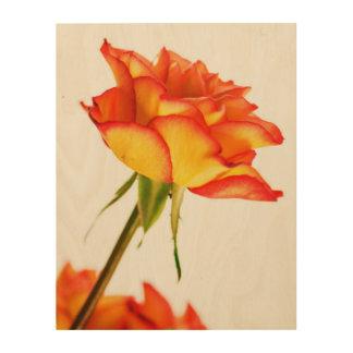 Autumn Splendor Fire Rose Flower Wood Canvas