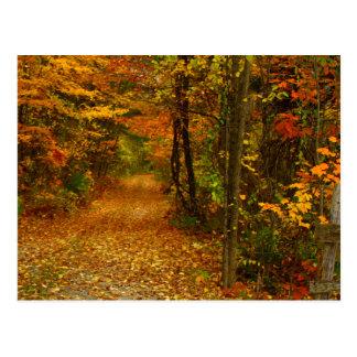 Autumn Splendor in New England Postcard