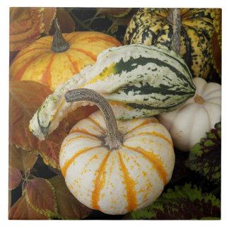 Autumn Squash Photo Tile