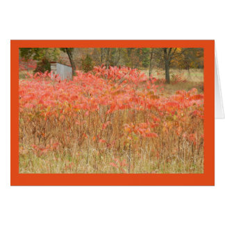 Autumn Sumac and Hunting Shack on Blank Note Card