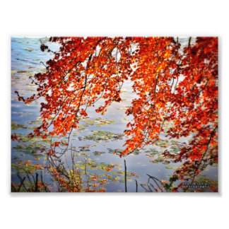 Autumn Sunlight #2 Photo Print