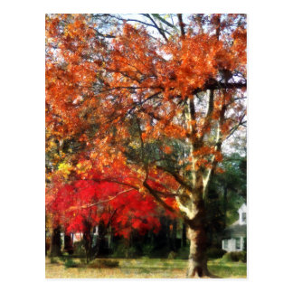 Autumn Sycamore Tree Postcard