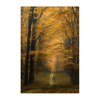 Autumn Time Melancoly Nature Acrylic Wall Art