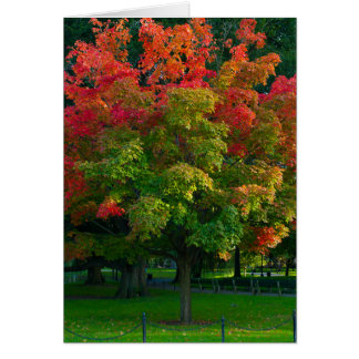 Autumn tree in Boston Public Garden Card