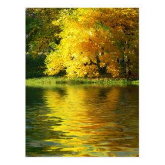 Autumn tree in the forest with reflection postcard