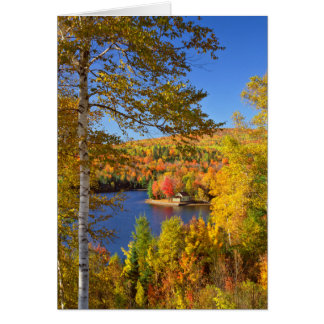 Autumn tree landscape, Maine Card