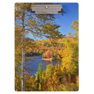 Autumn tree landscape, Maine Clipboards