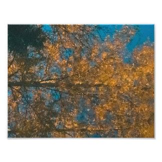Autumn tree reflection in water print Consett Photo Art
