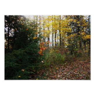 Autumn Tree Scene Poster