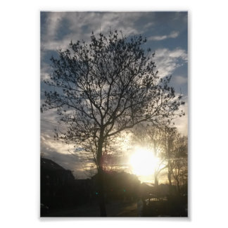Autumn Tree Sunrise Art Photo