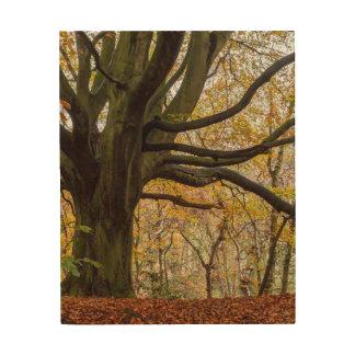 Autumn Tree Wood Prints