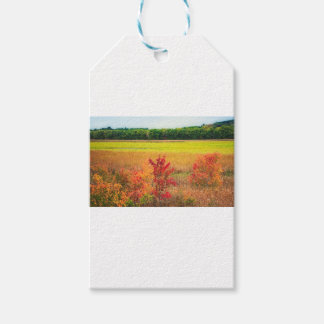 Autumn Trees at Great Meadows Gift Tags
