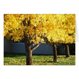 Autumn Trees at Vichy Springs Resort Card