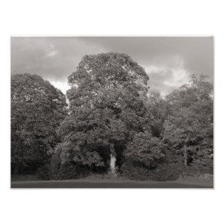 Autumn Trees, Bute Park, Cardiff Art Photo
