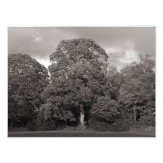 Autumn Trees, Bute Park, Cardiff Photographic Print
