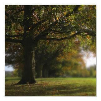 Autumn Trees Landscape Photo Print
