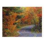 Autumn trees line roadway in Itasca State Park Postcards
