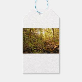 Autumn Trees on Willard Brook Gift Tags