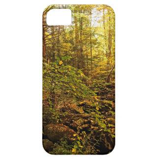 Autumn Trees on Willard Brook iPhone 5 Cover
