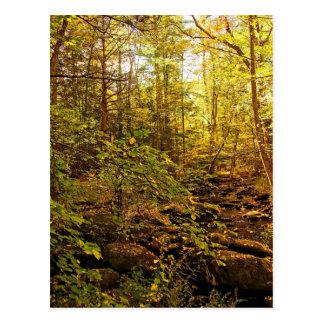 Autumn Trees on Willard Brook Postcard