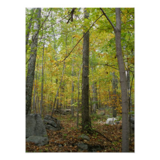 Autumn Trees Print