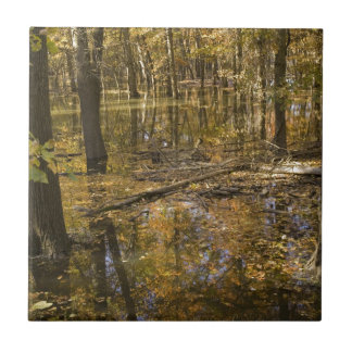 AUTUMN TREES STANDING IN WATER SMALL SQUARE TILE