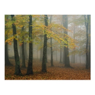 Autumn view of foggy forest, Grandfather 3 Postcard