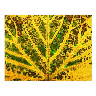 autumn vine leaf texture pattern plant nature postcard