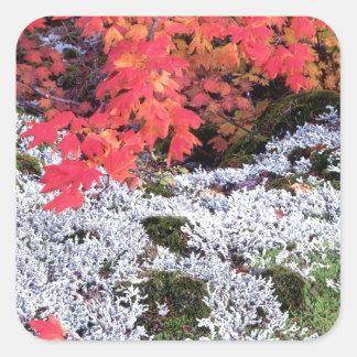 Autumn Vine Maple And Lichens Square Sticker