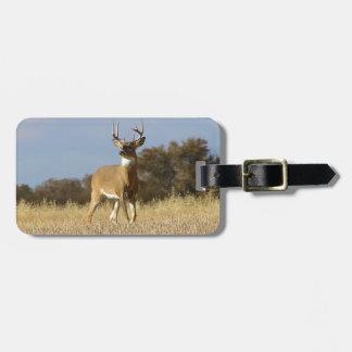 Autumn Whitetail Buck Luggage Tag