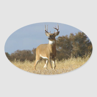 Autumn Whitetail Buck Oval Sticker