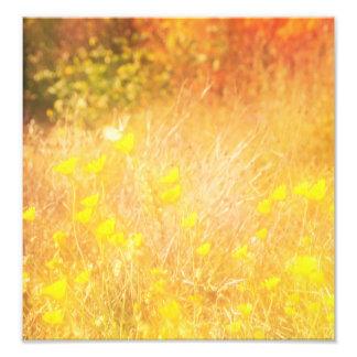 Autumn wing photo art