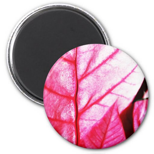 Autumn winter Leafs natural natural  Green Trees E Magnets