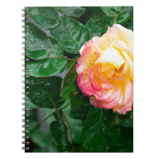 Autumn withered rose with raindrops notebooks