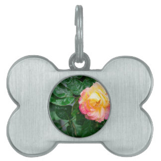 Autumn withered rose with raindrops pet name tag