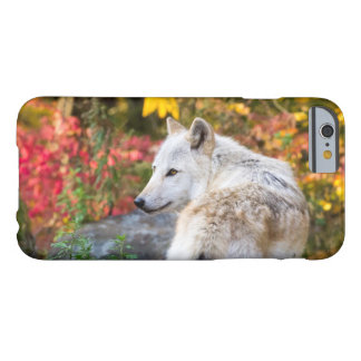 Autumn Wolf Barely There iPhone 6 Case