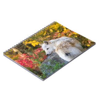 Autumn Wolf Notebooks