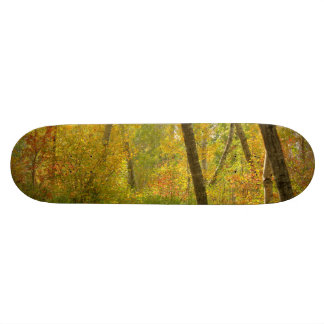 Autumn Woodlands 21.3 Cm Mini Skateboard Deck