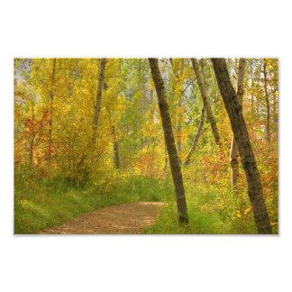 Autumn Woodlands Photo Print