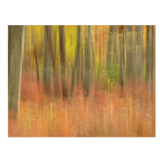 Autumn woods abstract post cards