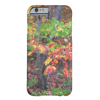 Autumn Woods Glory Barely There iPhone 6 Case