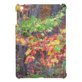 Autumn Woods Glory iPad Mini Covers