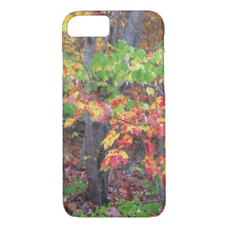 Autumn Woods Glory iPhone 7 Case
