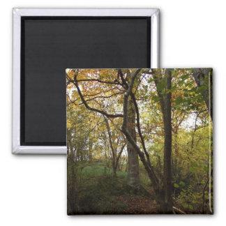 Autumn Woods Magnet
