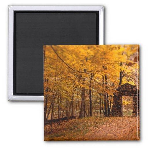 Autumn Woods Fridge Magnet