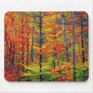 Autumn Woods Mouse Pad