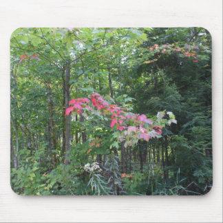 Autumn Woods Mouse Pad