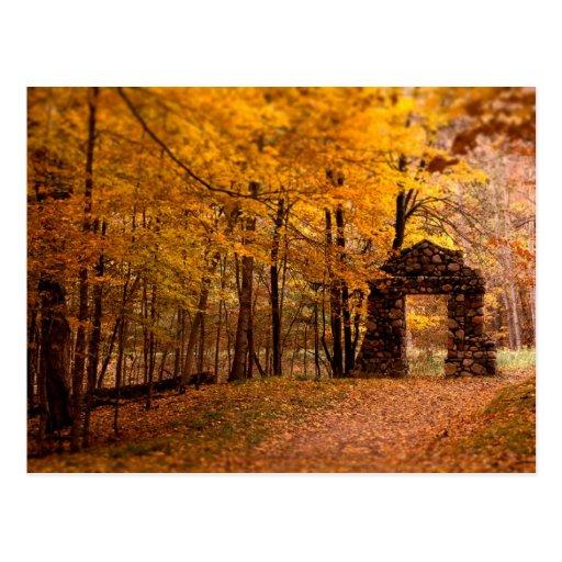 Autumn Woods Post Card