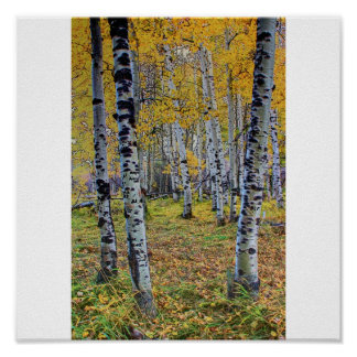 Autumn Woods Print